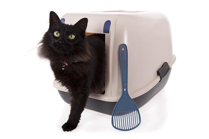 Das richtige Katzenstreu - Darauf sollten Sie achten