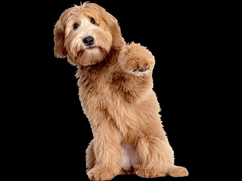 DasFutterhaus activa Friends Hundenahrung