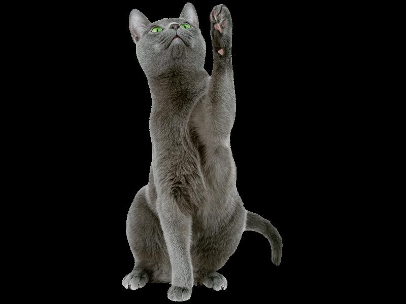 DasFutterhaus activa Friends Katzennahrung