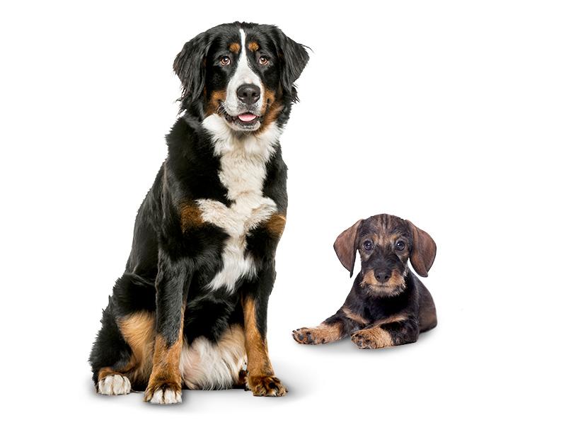 Hundenahrung Futterhaus