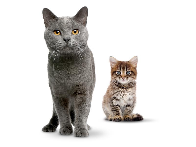 Katzenfutter DASFUTTERHAUS