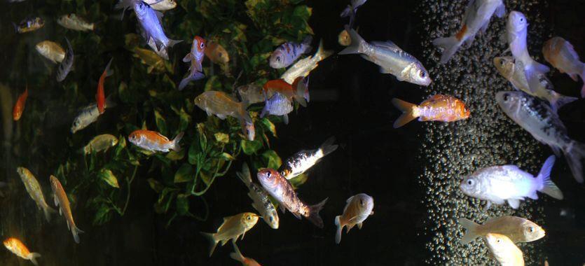 Aquaristik-Experten