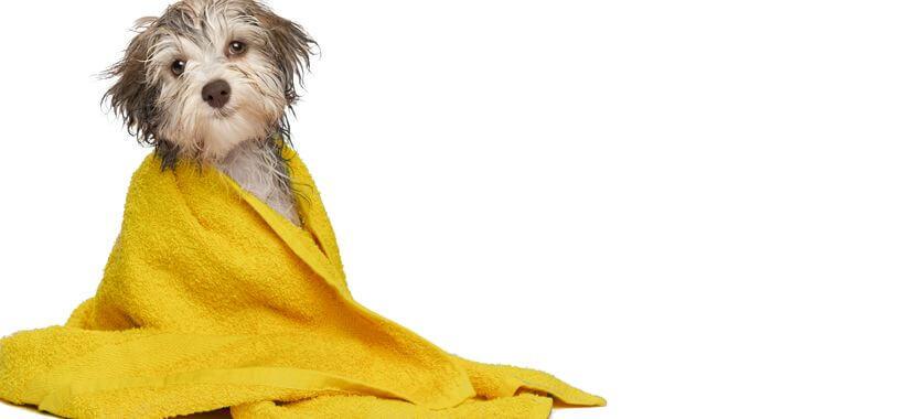Hund in der Hundewaschanlage