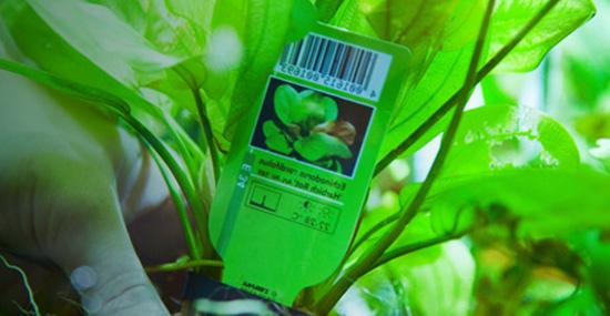 Wasserpflanze