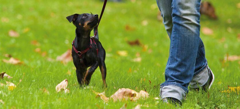 Hundespaziergang mit Hundegeschirr