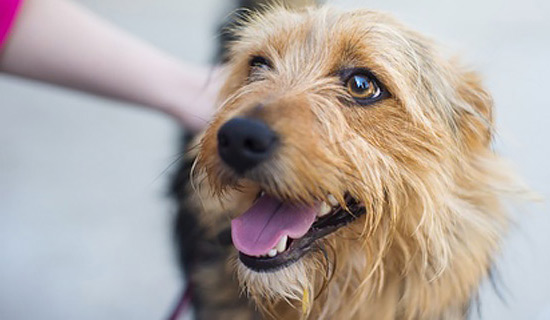 Belohnung für Hunde ohne Snacks