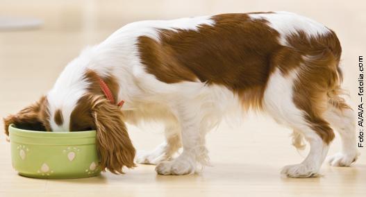 Hund am Fressen