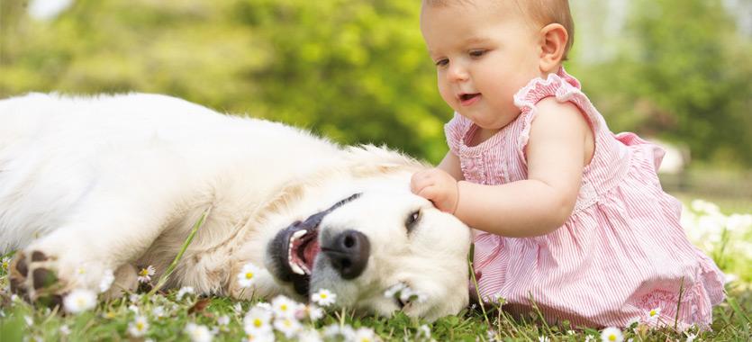 Hunde in Familien mit Kind