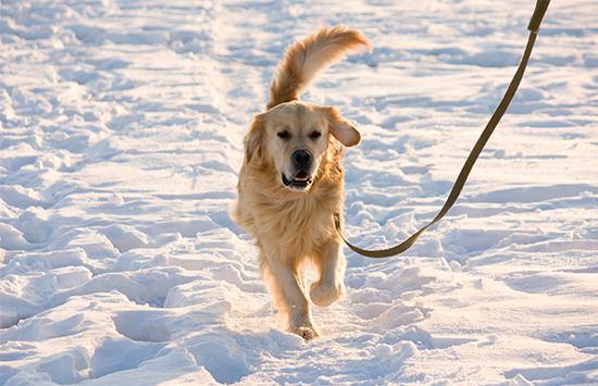 Trainingsaufbau für Joggen mit Hund