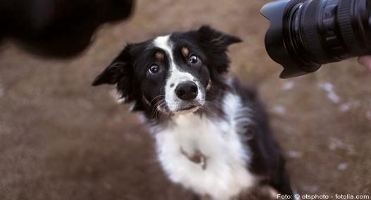unsicherer Hund