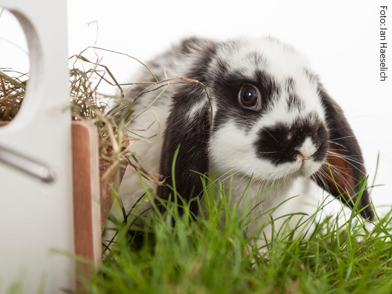 Kaninchen richtig anweiden