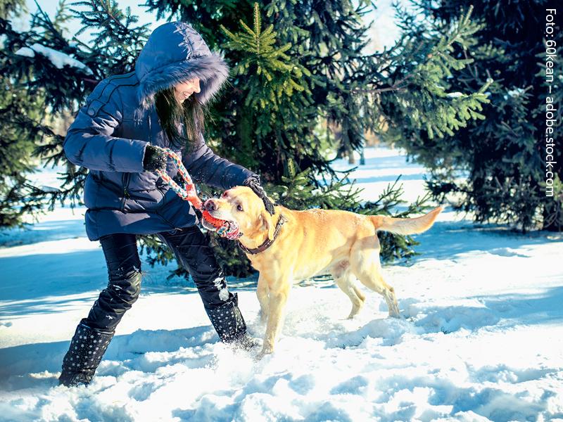 Uebergewicht bei Hunden