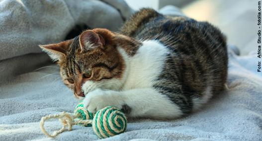 spielende Katze
