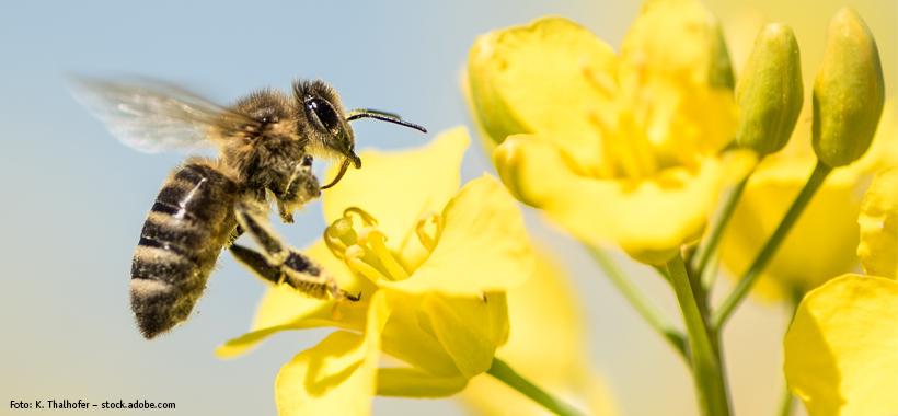 Bienen bei DAS FUTTERHAUS