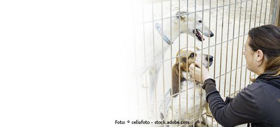Tierheimspenden von DAS FUTTERHAUS