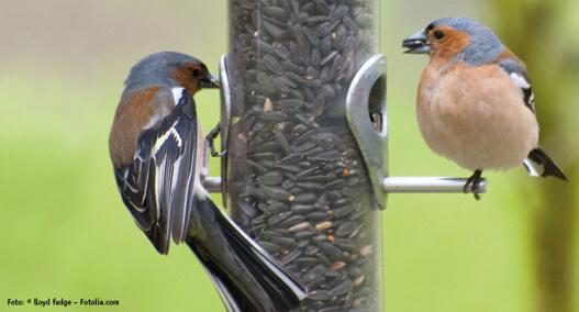 Natur plus Vogelfutter