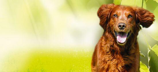 DAS FUTTERHAUS Eigenmarke Natur Plus Hunde