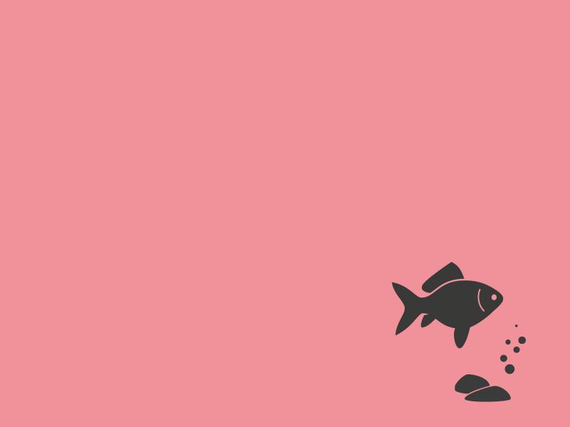 Teaserbild Fachverkäufer Aquaristik